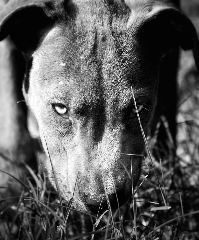 Vigilance by Jimmy Barber