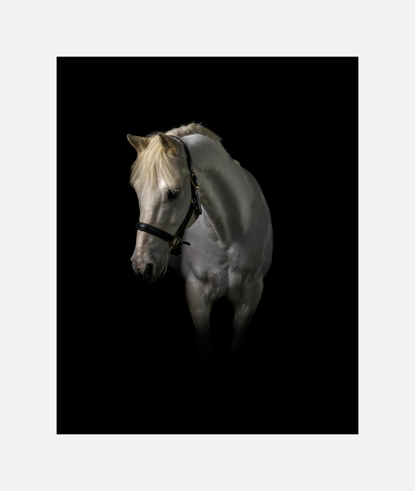 White Horse in Darkness by John Ohle