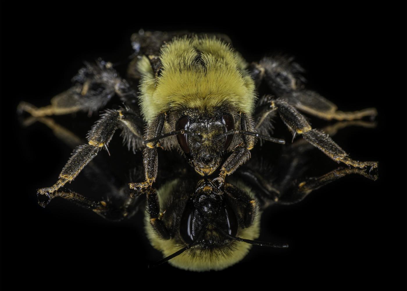 Bumblebee by Aaron Duke