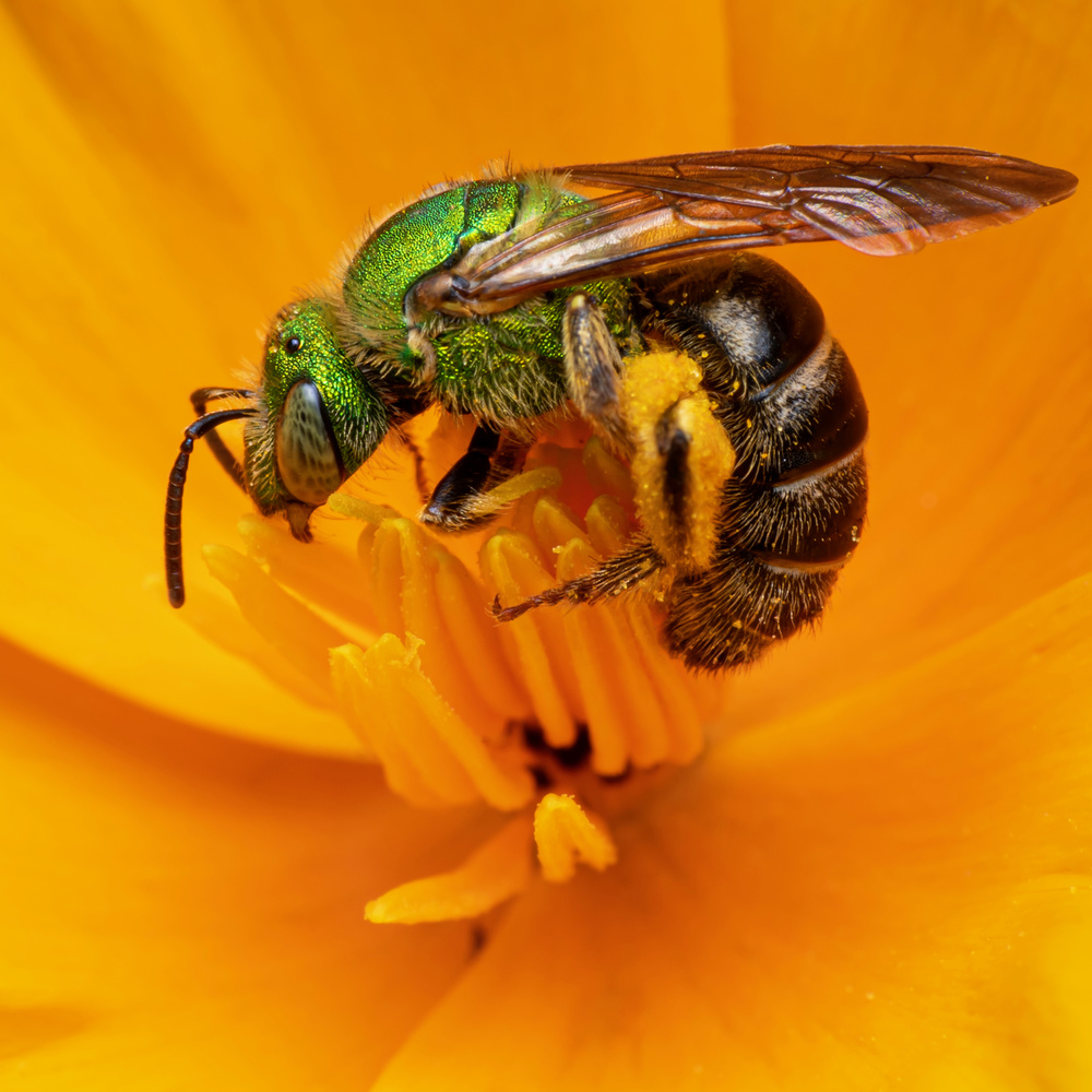 Pollinated by Aaron Duke