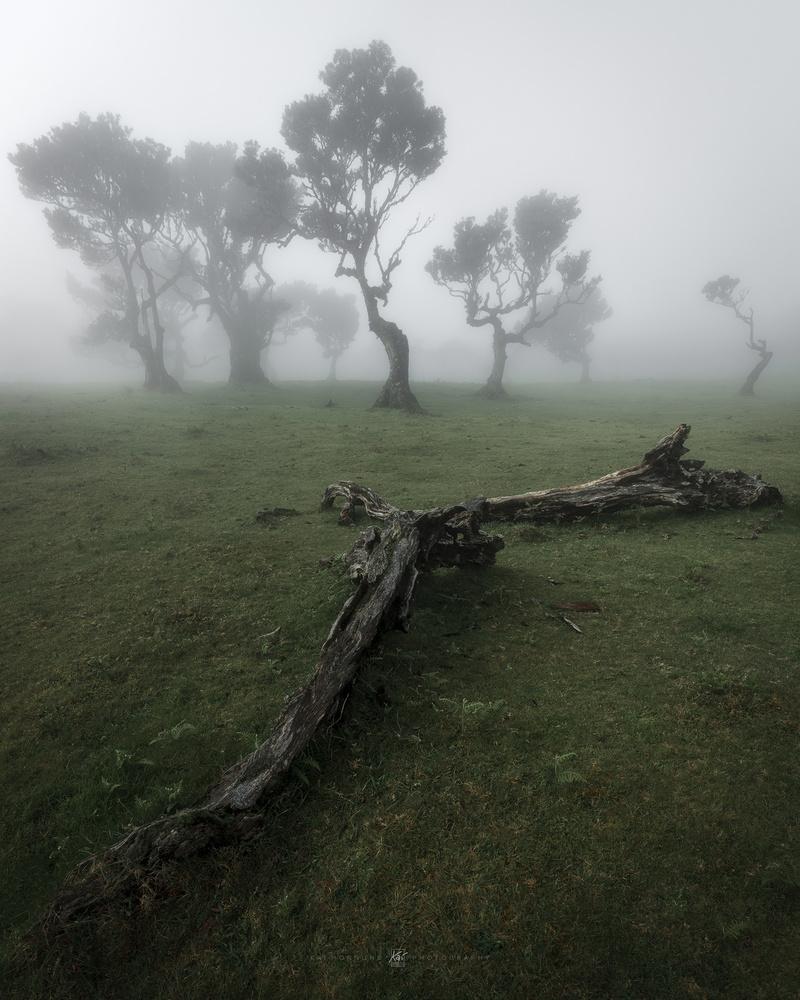 Madeira moody by Kai Hornung