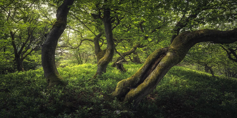 the green hill by Kai Hornung