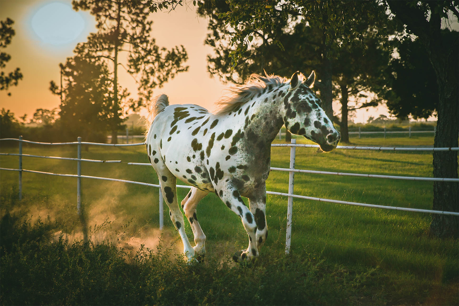 Running Horse by Francis Panes