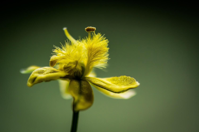 Tiny Yellow by Novak Miler