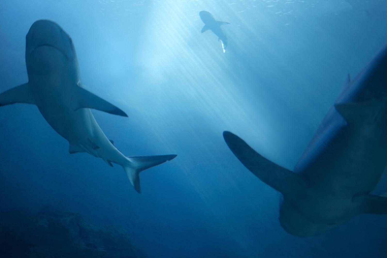 sharks by Stanislas Dorange
