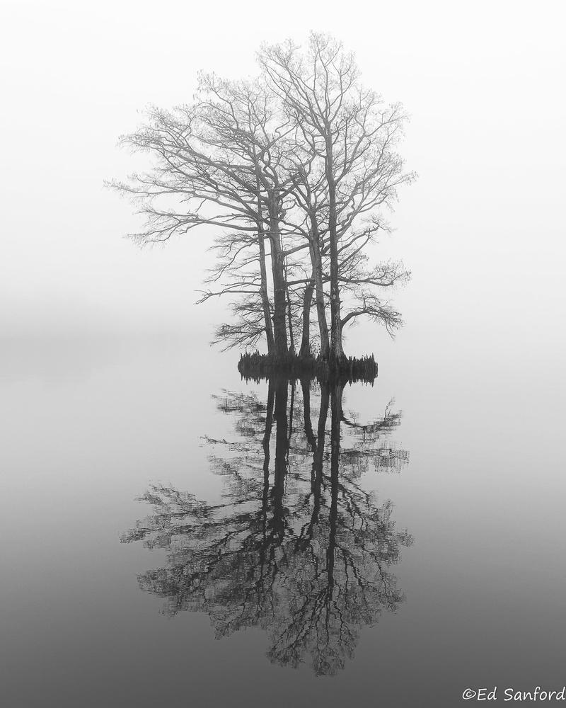 Twin Cypress Trees, Edenton Bay by Ed Sanford