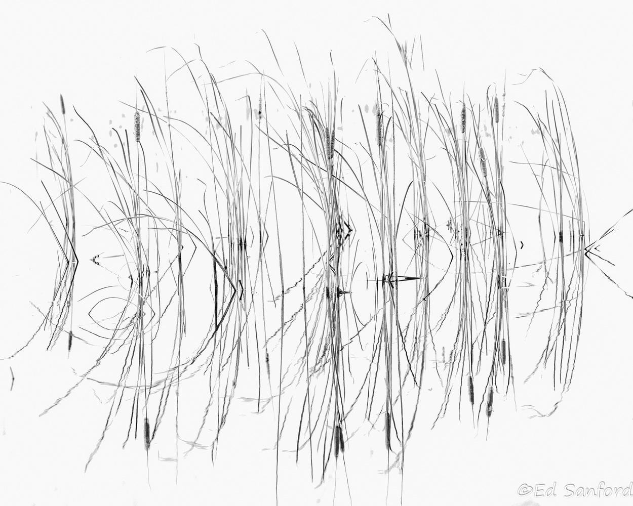 Cattails & Reeds, Lake Mattamuskeet by Ed Sanford