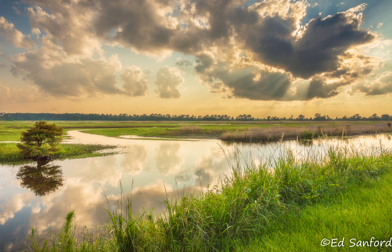 Wetlands Near Lake Mattamuskeet NC by Ed Sanford
