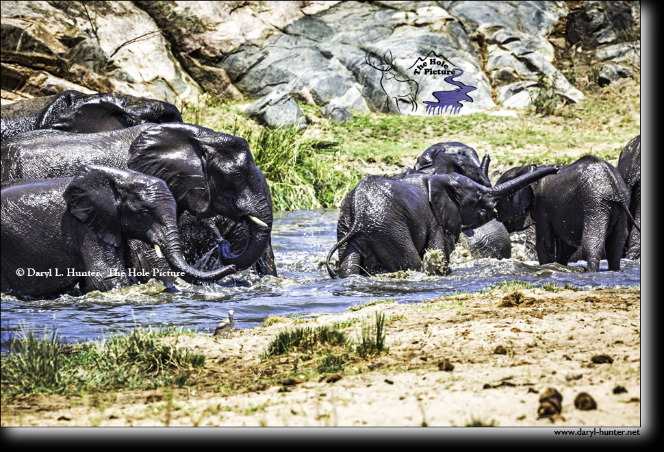 Elephants at the waterhole by Daryl Hunter