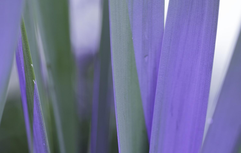 Green Purple by Edward Lakes