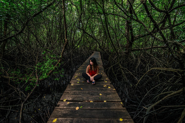 Mangrove Forest by Marek Stefech