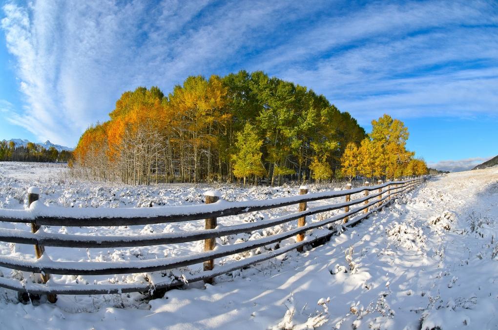 Aspens in Snow by Nasim Mansurov