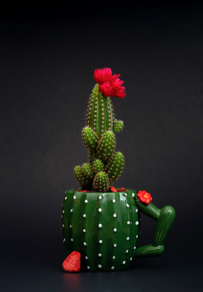 Cactus Cactus by Timothy Hines