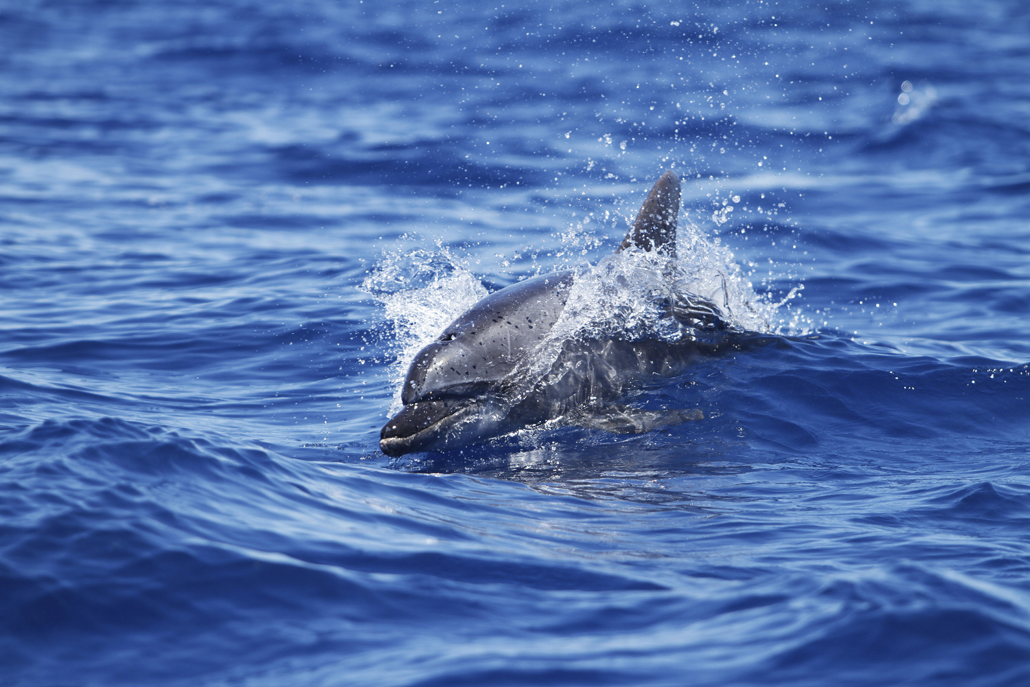 Dolphin Day Out by Shayne Holzheimer