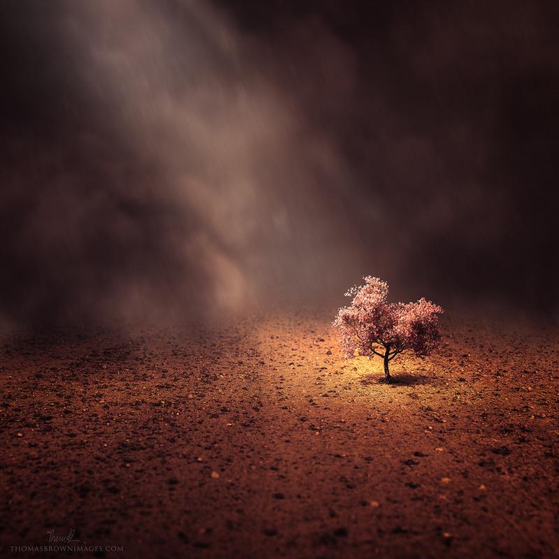 Dancing in the rain of descending ash by Thomas Brown