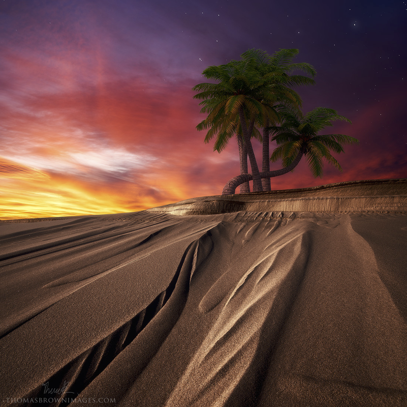 The Blizzard's Never Seen The Desert Sands  by Thomas Brown