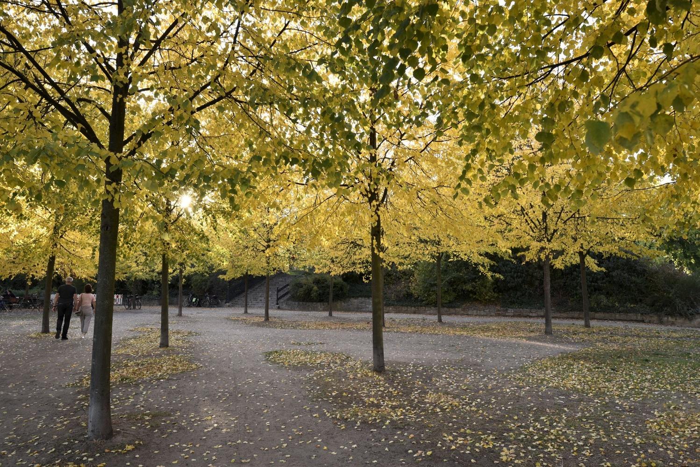 Trees by Bernd Hauptvogel