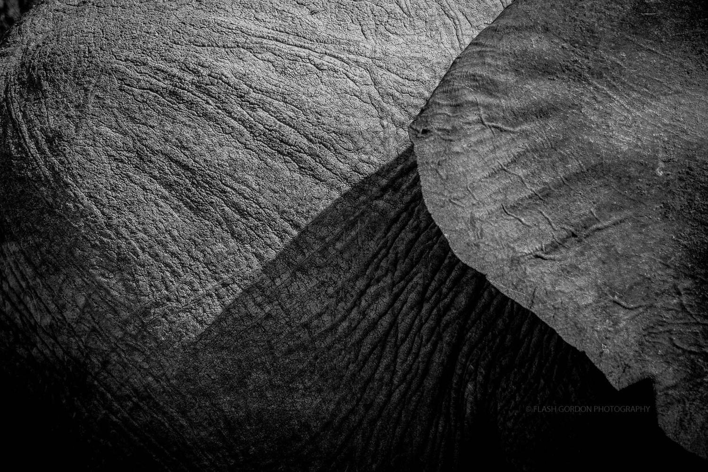 Desert Adapted Elephant by Gordon Cahill