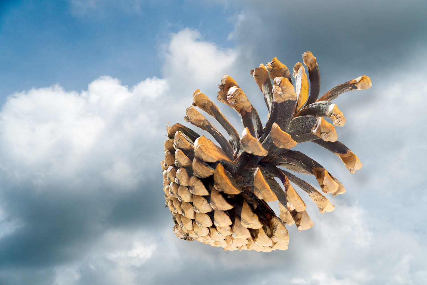 Composite, Floating Pine Cone by Charles Haacker