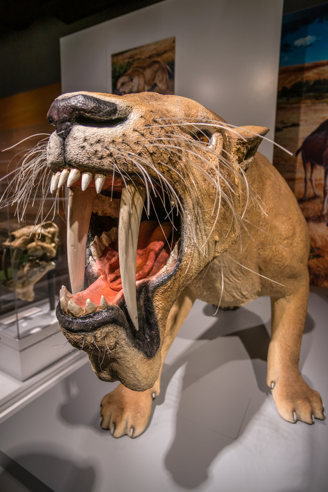 Barbourofelis fricki, Saber-toothed Not Cat by Charles Haacker