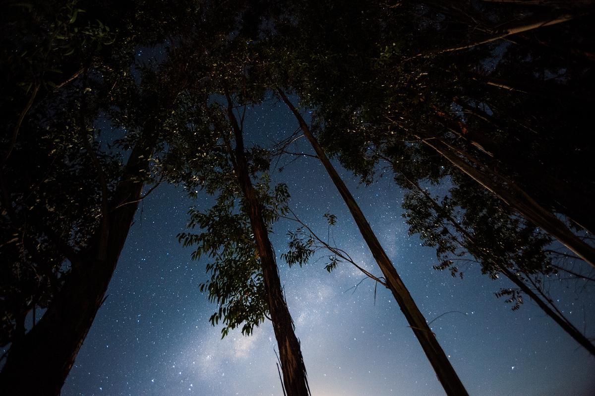 Eucalyptus sky by Hermann Bouroncle
