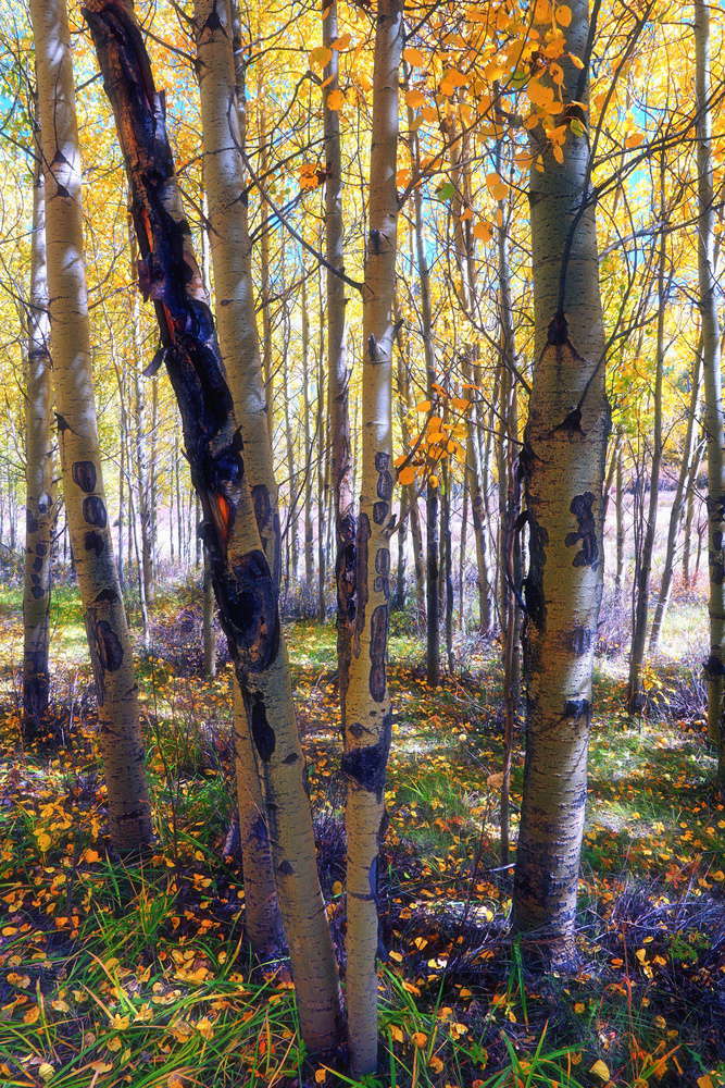 Dappled Autumn Forest by Brian Kerls