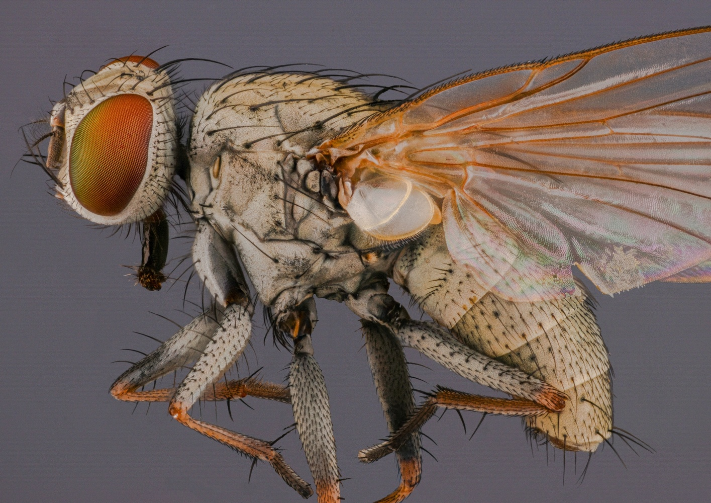Housefly by Mert Filiz