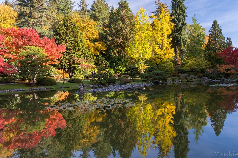 reflecting upon autumn by JetCity Ninja