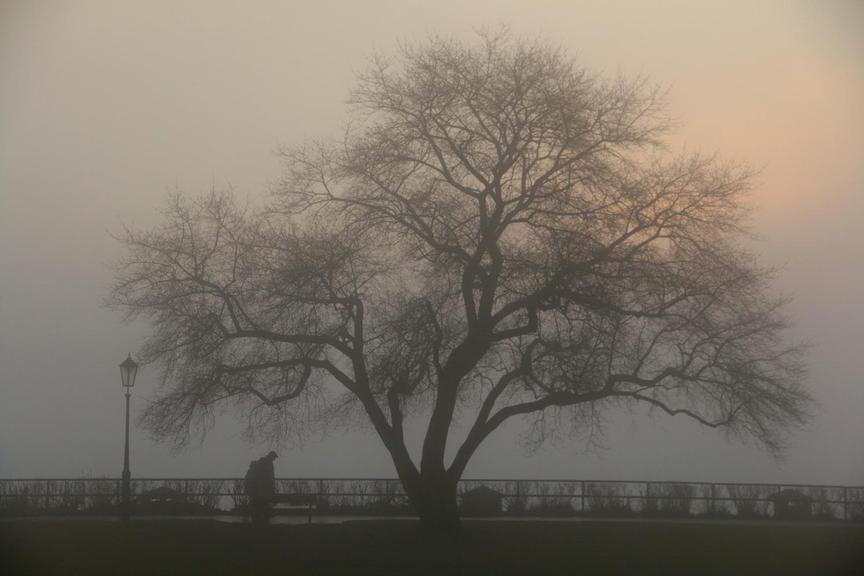 Tree in the Mist by Daniel Jones