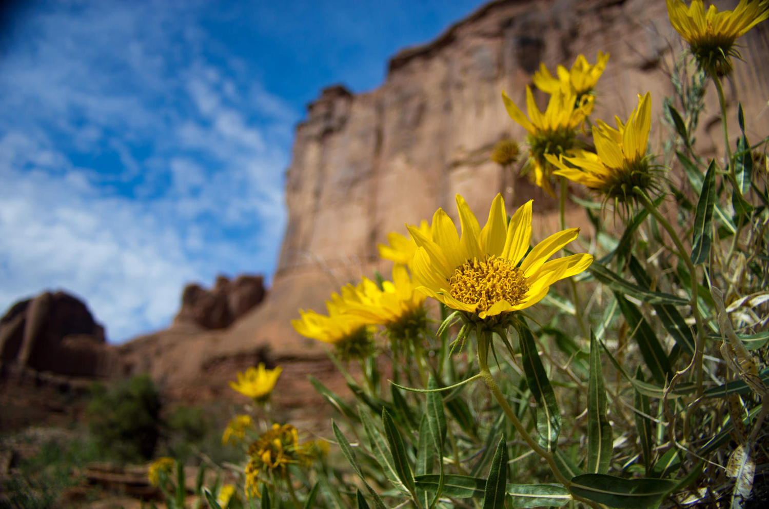 Desert Flowers  by Stephen Cihanek