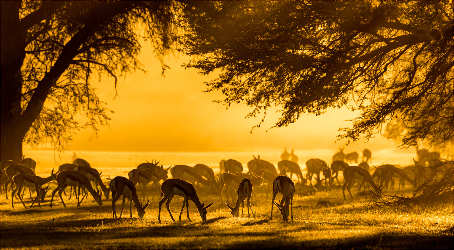 Early morning graze  by Llewellyn Louw