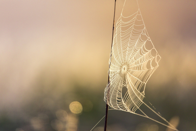 The Misty Morning by Mark Rutt