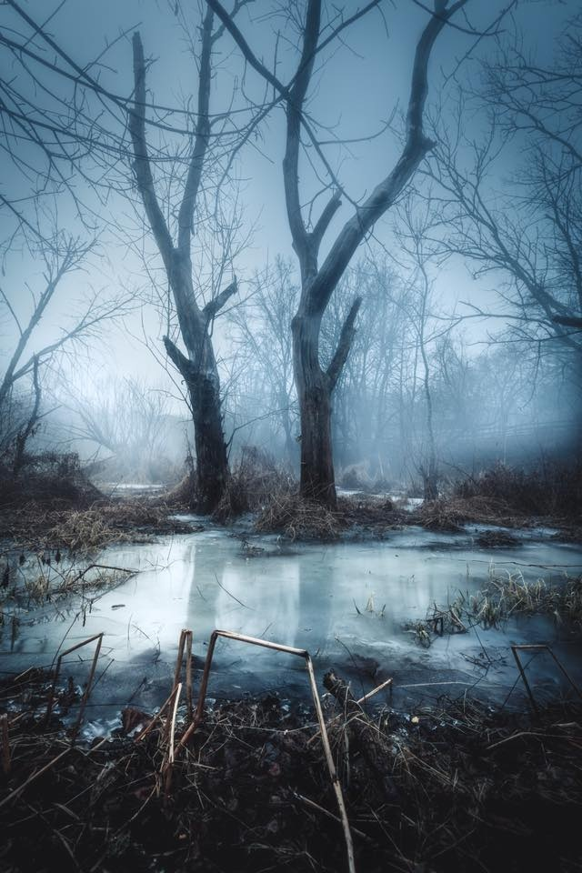 Winter Remains by Mark Rutt