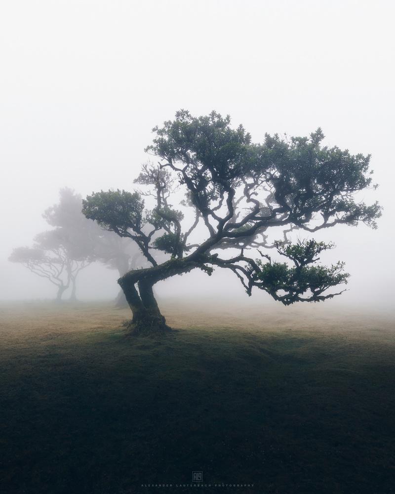solitude by Alexander Lauterbach