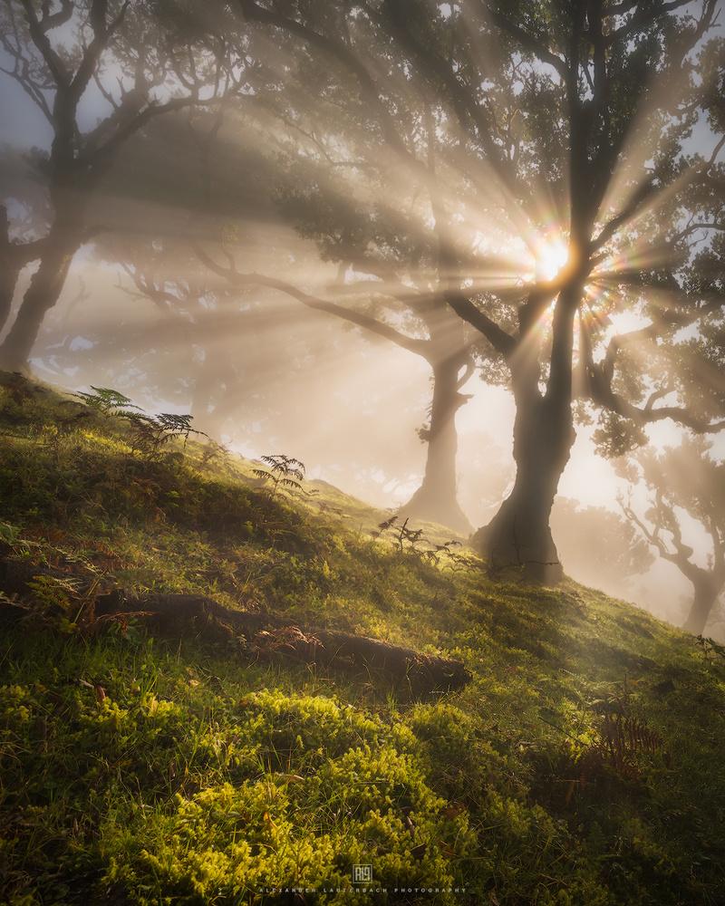 magical awakening by Alexander Lauterbach