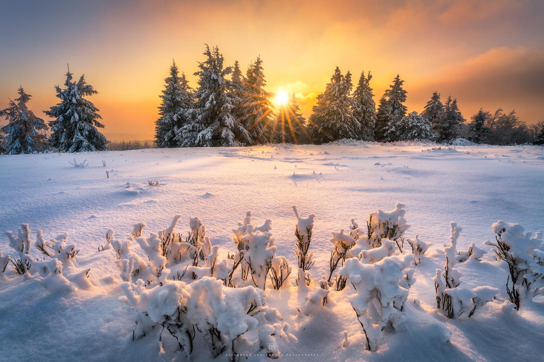 winter wonderland by Alexander Lauterbach