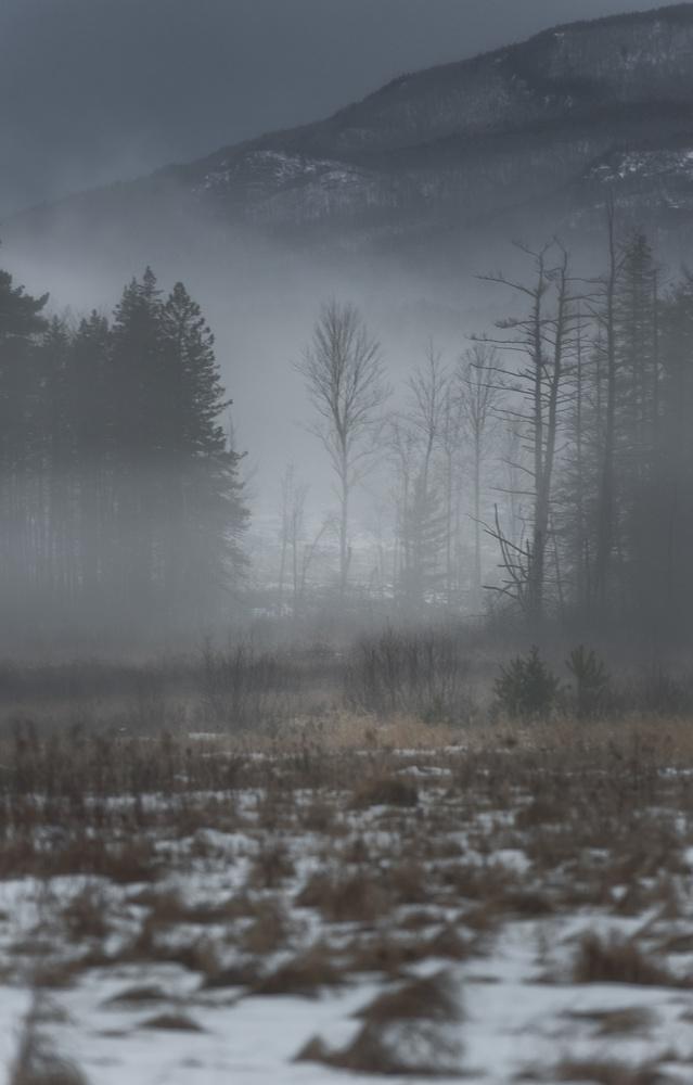 Ghost of Winter by Tim Behuniak