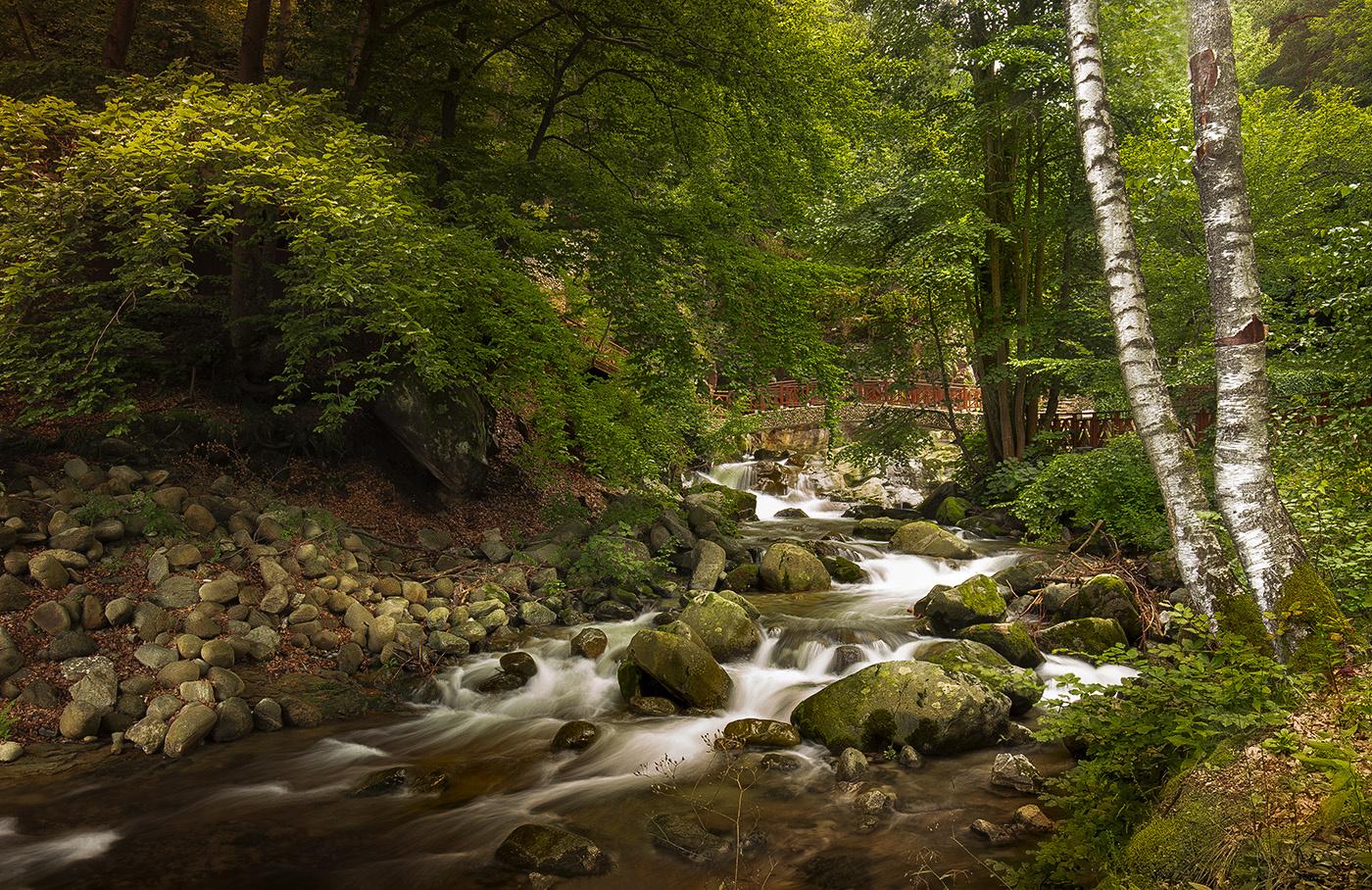 Old river by Angel Nikolov
