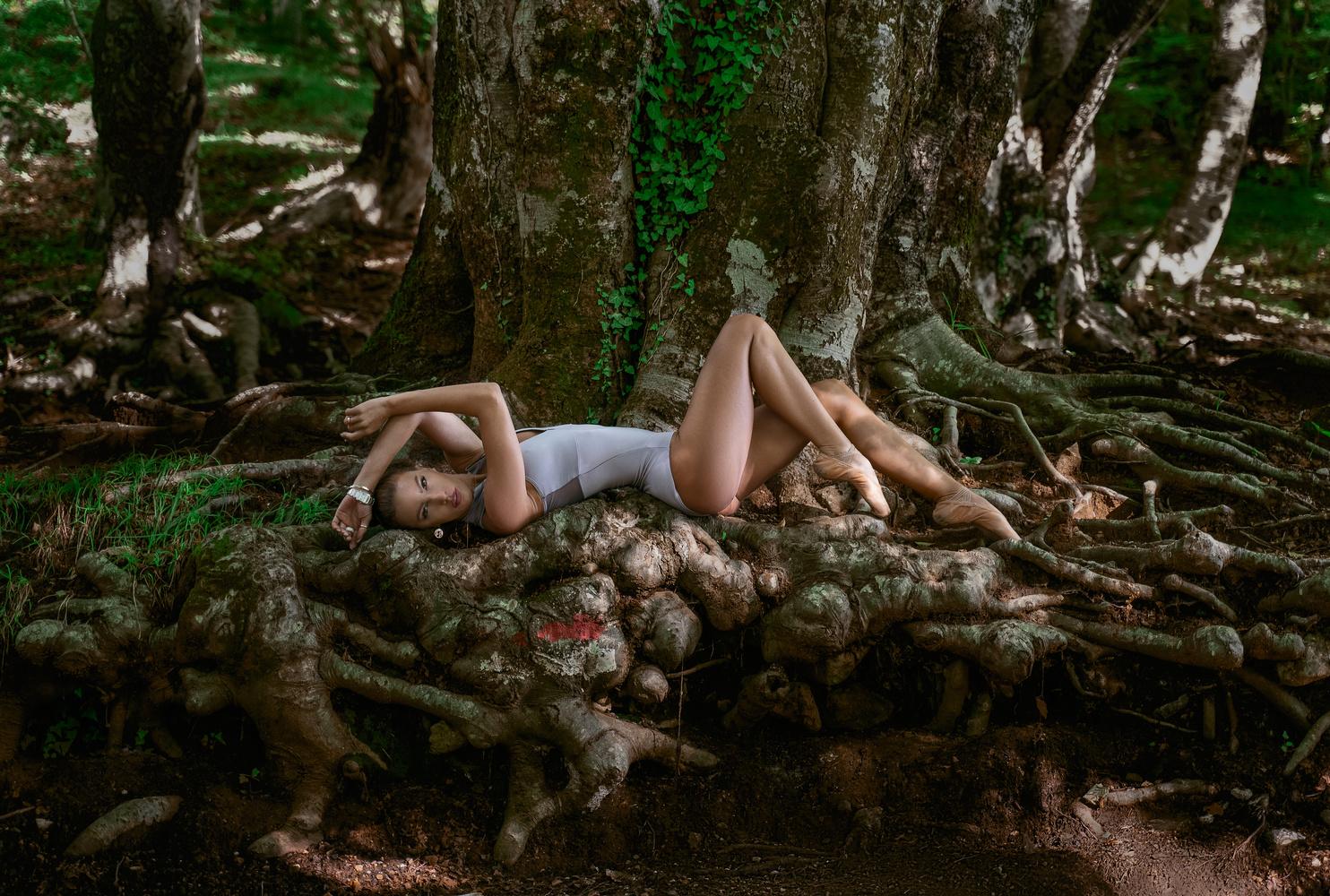 The tree by Ergys Shehu