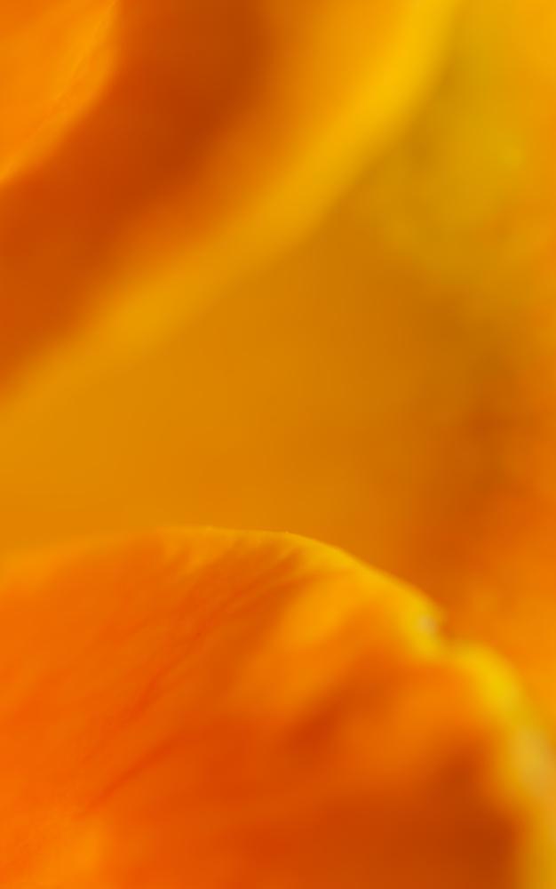 yellow petal by Andrés Aparicio