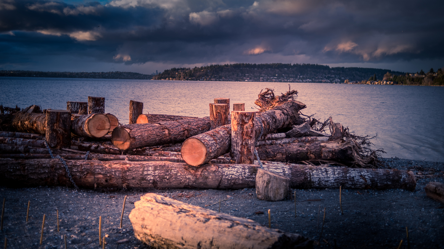 Logs by the Water by Harry Grewal