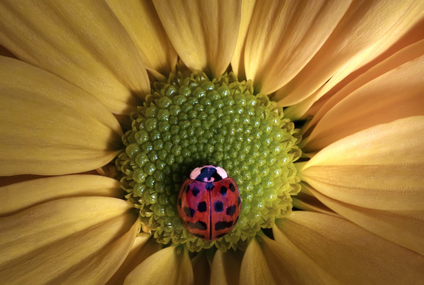 Ladybug by Stephen Clough