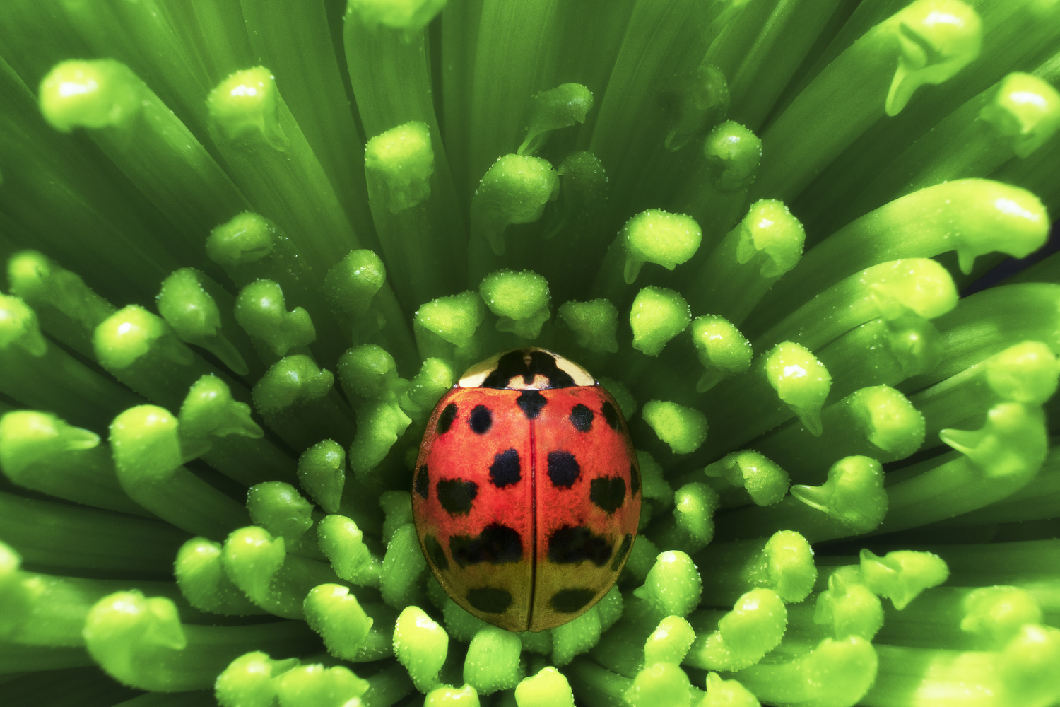 Ladybug by Stephen Clough