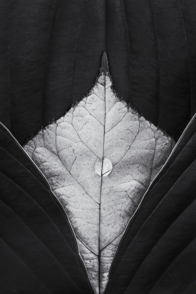 Leaves by Stephen Clough