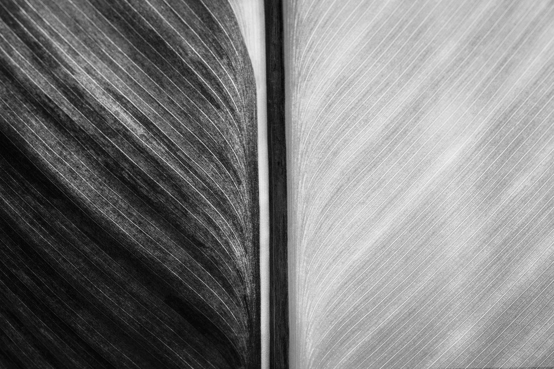 Canna leaf by Stephen Clough
