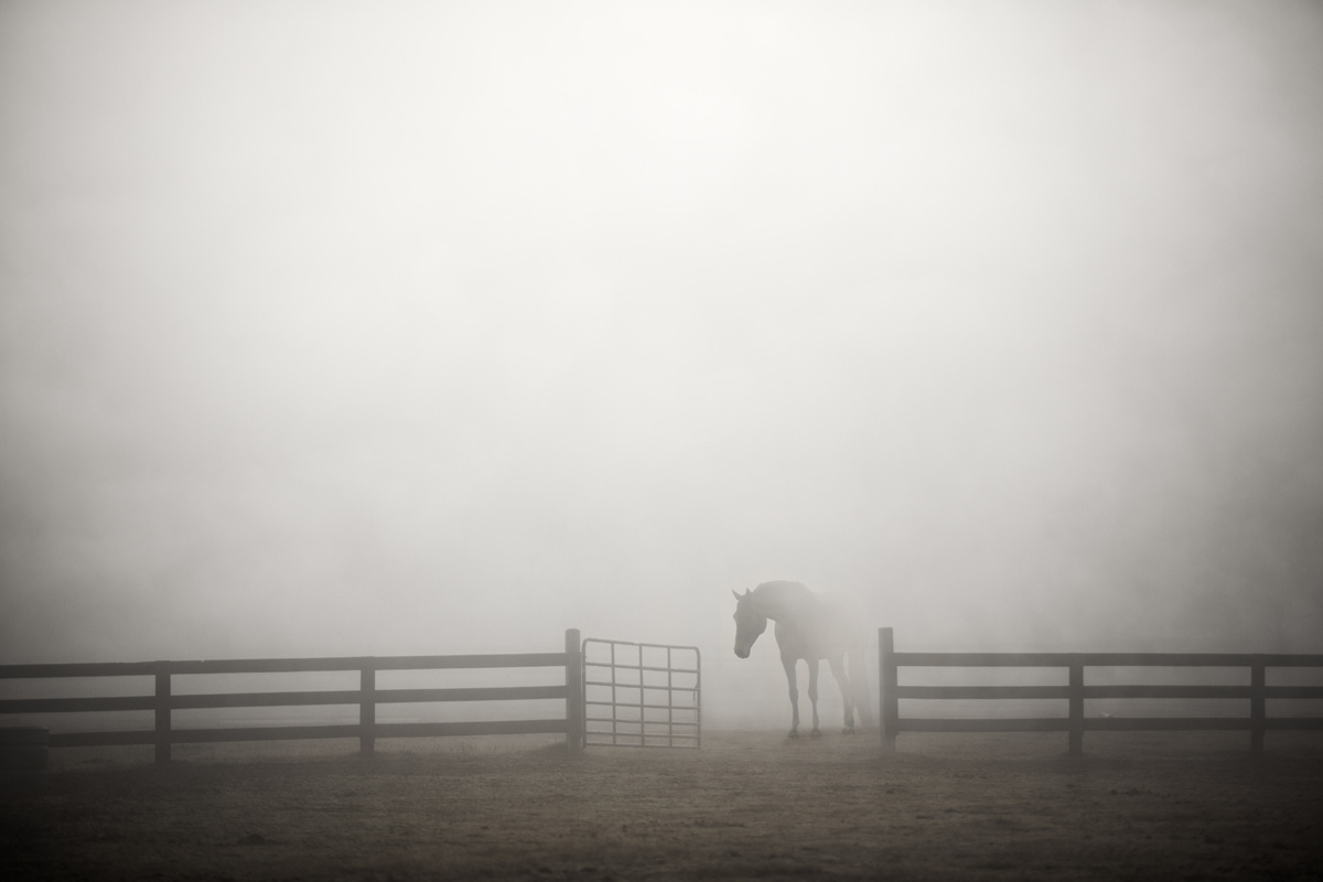 Emerging From Fog by Jimmy Williams