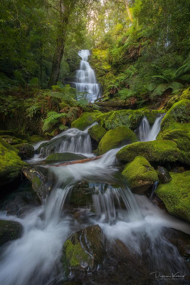 Bastion Cascades, Tasmania by Dietmar Kahles