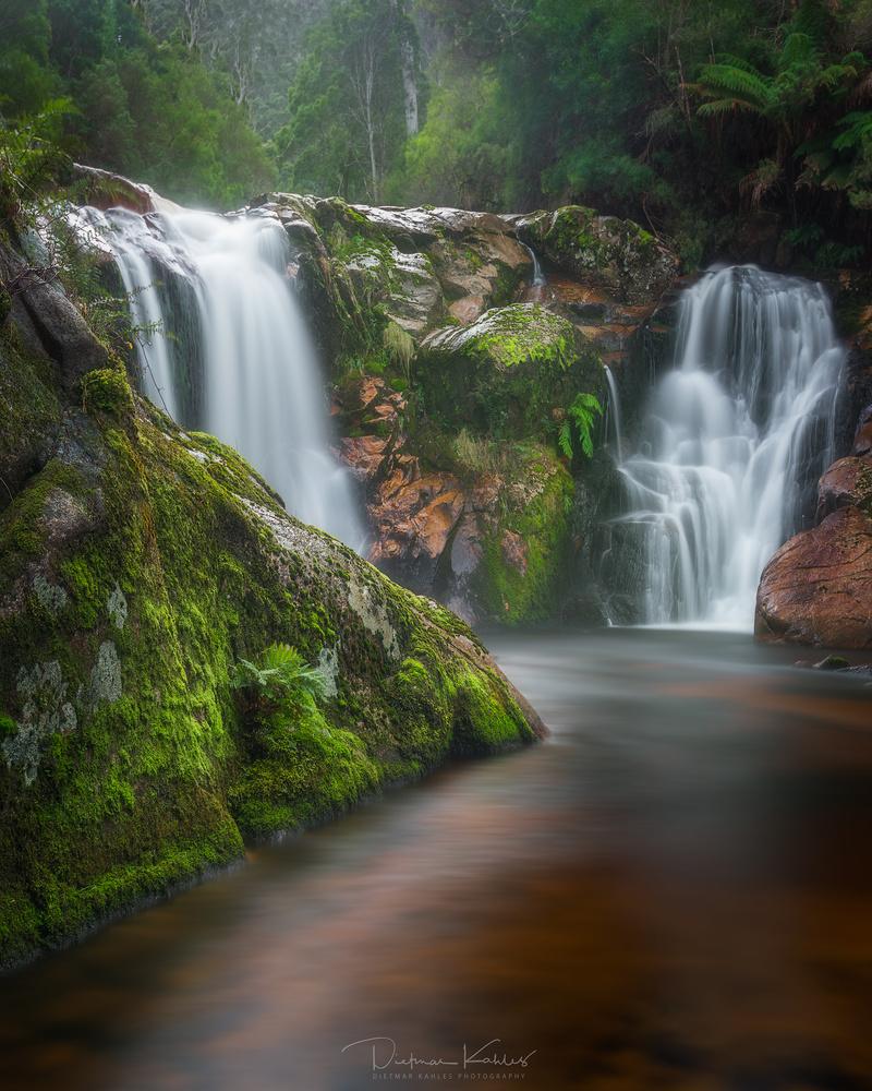 Halls Falls, Tasmania by Dietmar Kahles
