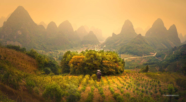Golden Haze by Cris Magsino