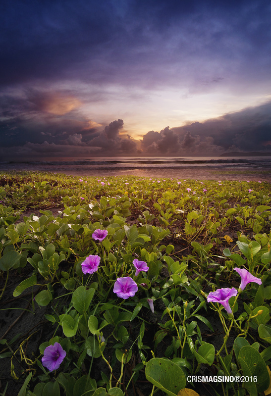 Bagasbas Daet Sunrise by Cris Magsino